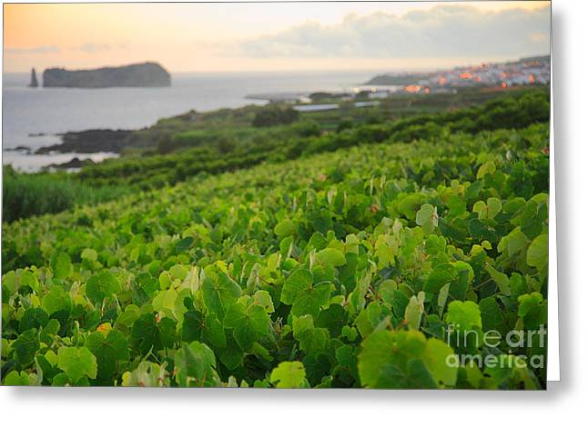 Grapevines And Islet Greeting Card by Gaspar Avila