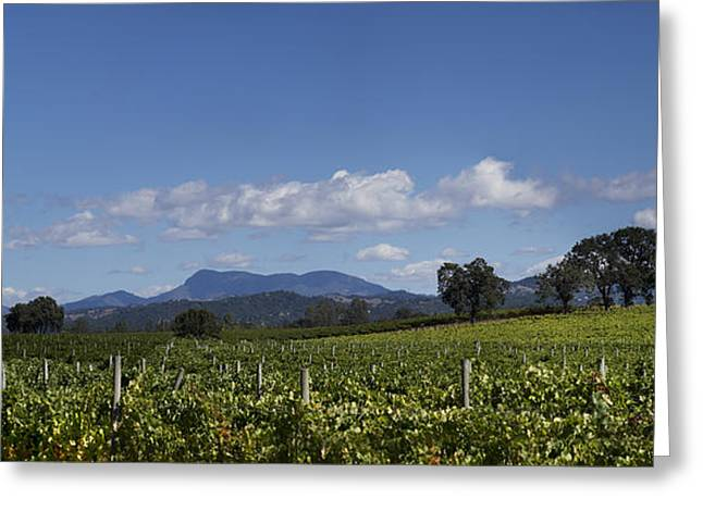Grapevines Of Saint Helena Greeting Card by Stan Angel