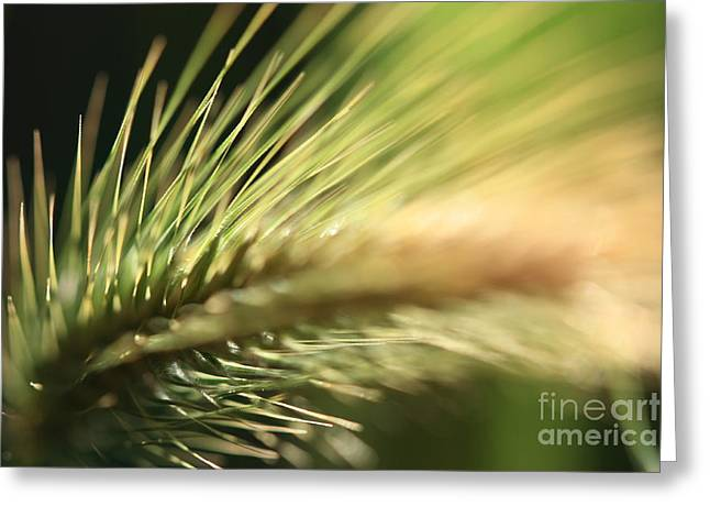 Grass 1 Greeting Card by Rebeka Dove