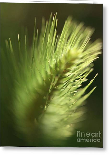 Greeting Card featuring the photograph Grass 2 by Rebeka Dove