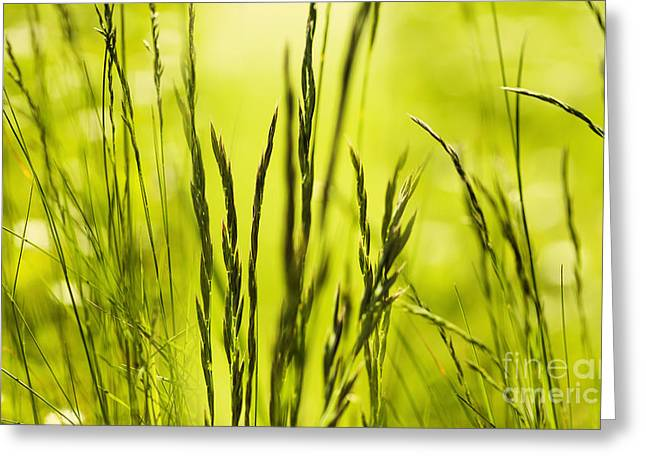 Grass Abstract Greeting Card by Svetlana Sewell
