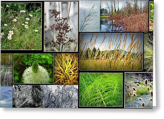 Grass Collage Variety Greeting Card by Tikvah's Hope