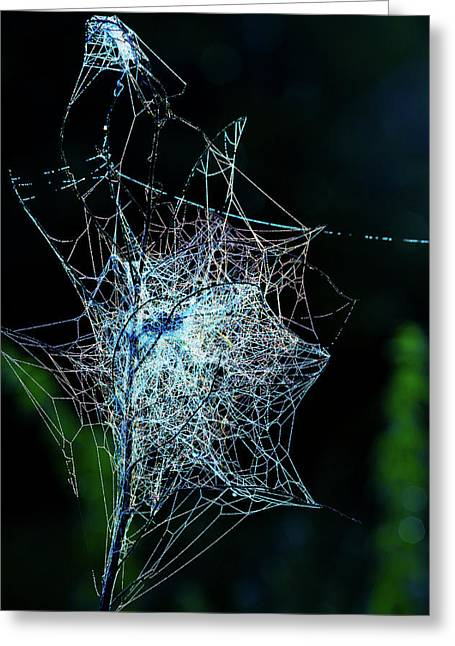 Grass Covered With Spider's Web Greeting Card