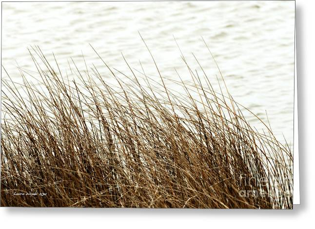 Grass Down By The Shore Of Virginia Beach Greeting Card by Artist and Photographer Laura Wrede