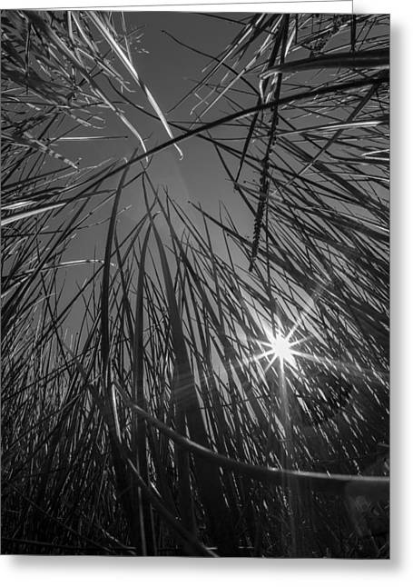 Grass Forest Greeting Card by Luca Diana