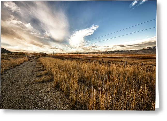 Grass Growing Along A Gravel Road Greeting Card