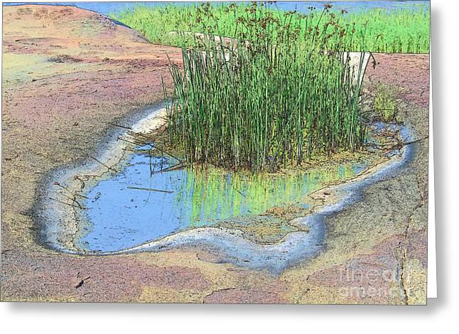 Grass Growing On Rocks Greeting Card by Teresa Zieba