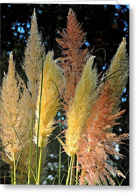 Grass In Color Greeting Card by Michael Bruce
