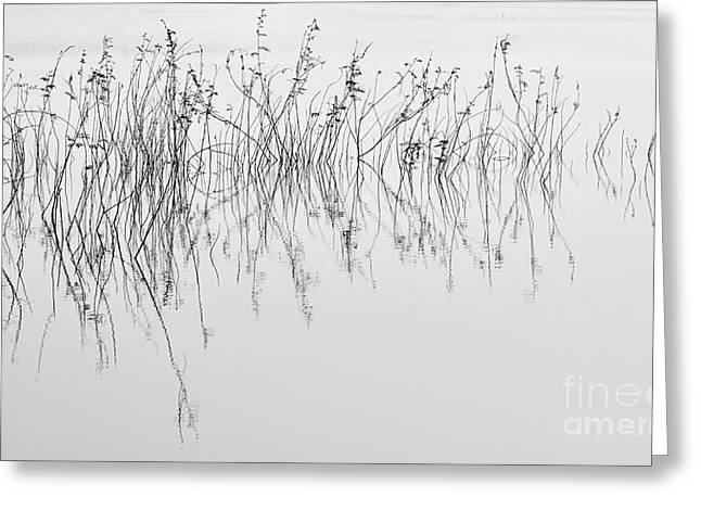 Grass In Lake Greeting Card