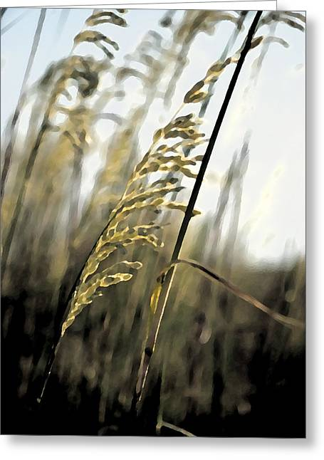 Grass In The Wind Pla 377 Greeting Card
