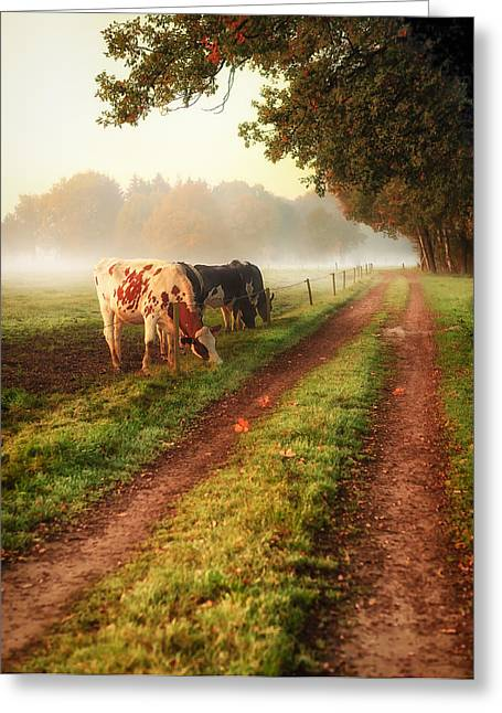 Grass Is Greener Greeting Card by Gigi Embrechts