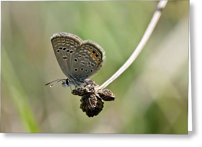 Grass Jewel Butterfly Greeting Card