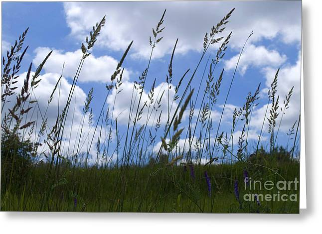 Grass Meets Sky Greeting Card