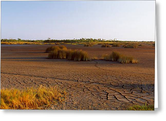 Grass On A Dry Land, Black Point Greeting Card by Panoramic Images