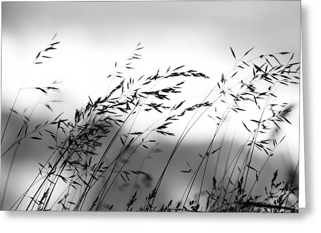 Grass On Mount Iwaki Greeting Card