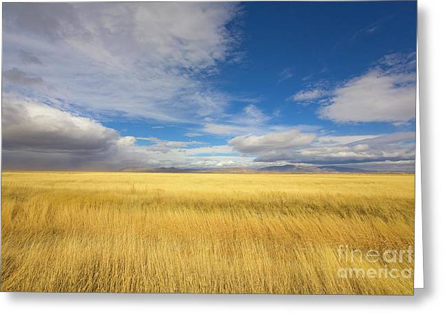 Klamath Basin Grasses And Clouds Greeting Card by Yva Momatiuk John Eastcott