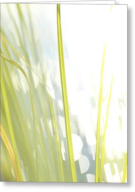 Grasses And Lake - High Key - Available For Licensing Greeting Card by Ulrich Kunst And Bettina Scheidulin