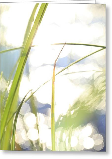 Grasses And Sun Reflections - High Key - Available For Licensing Greeting Card by Ulrich Kunst And Bettina Scheidulin
