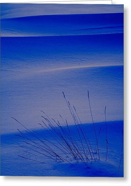 Grasses And Twilight Snow Drifts Greeting Card by Irwin Barrett