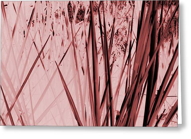 Grasses Greeting Card by Colleen Cannon