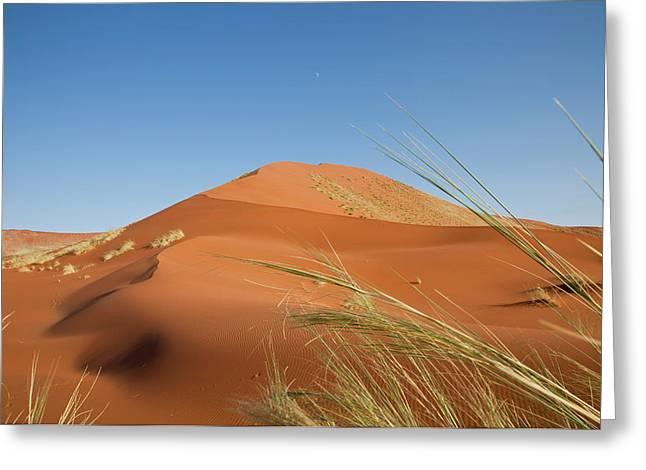 Grasses, Dune, And Setting Moon, Namib Greeting Card