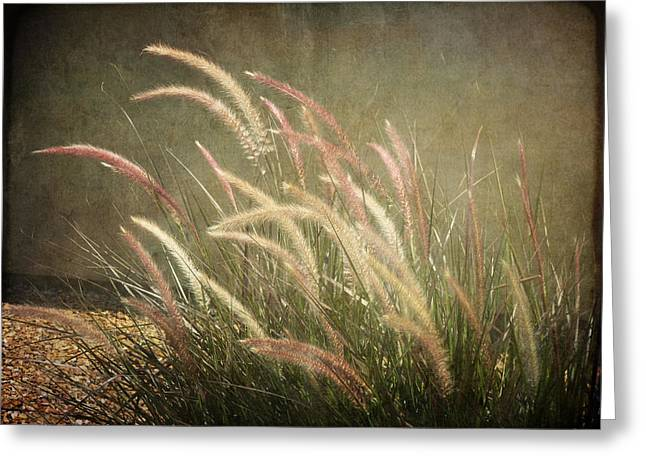 Grasses In Beauty Greeting Card