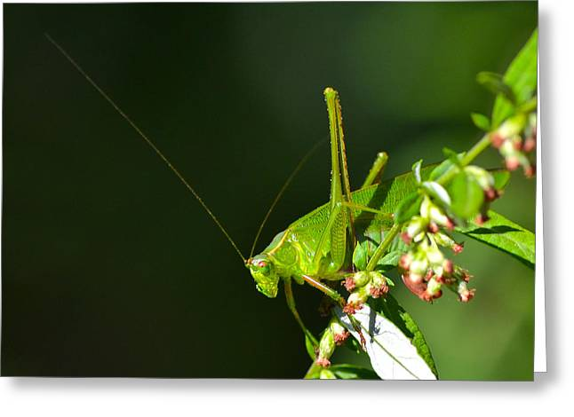 Grasshopper #1 Greeting Card