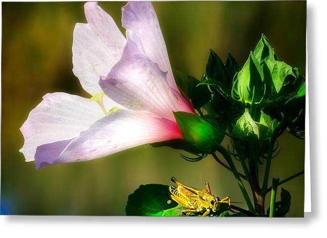 Grasshopper And Flower Greeting Card by Mark Andrew Thomas