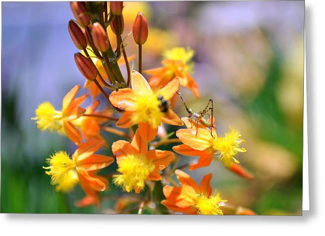 Grasshopper And The Bee Greeting Card by Ashley Fortier