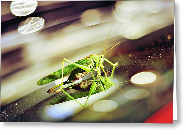 Grasshopper Disco Greeting Card by Gynt