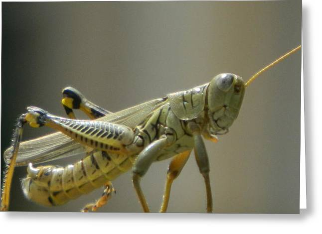 Grasshopper In Profile Greeting Card by David  Ortiz