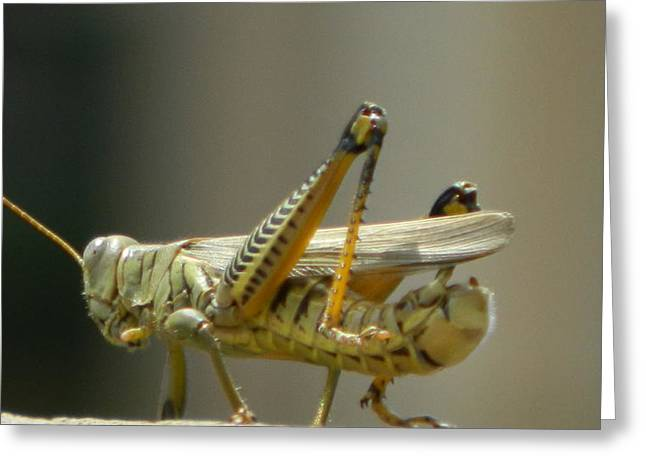 Grasshopper On His Way Out Greeting Card by David  Ortiz