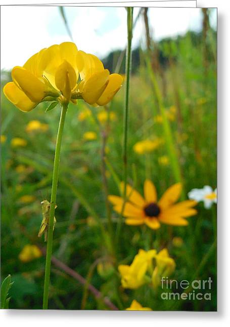 Grasshopper On Yellow Flower Greeting Card by Rowena Throckmorton