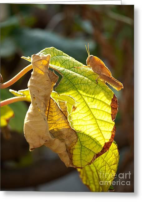 Grasshopper Pest Greeting Card by Sinisa Botas