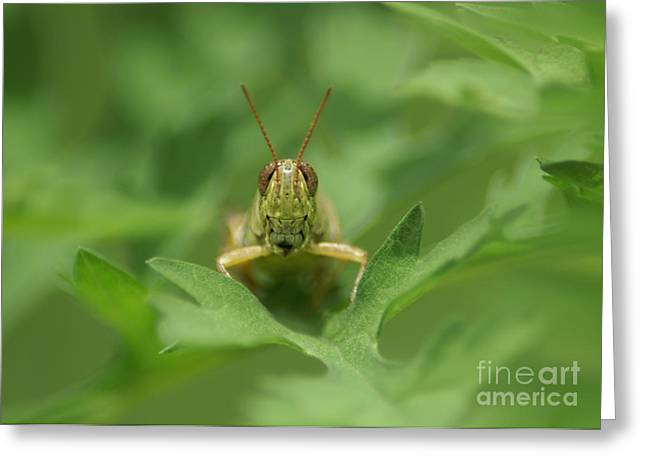 Greeting Card featuring the photograph Grasshopper Portrait by Olga Hamilton