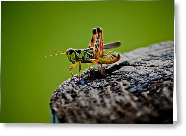 Grasshopper Greeting Card by Swift Family