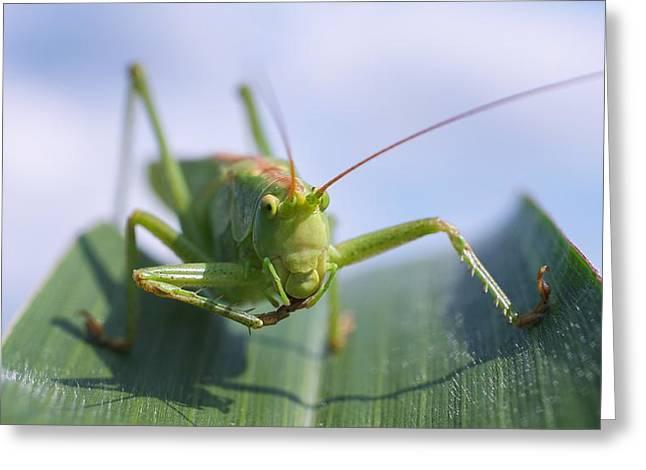 Grasshopper Greeting Card by Tilen Hrovatic