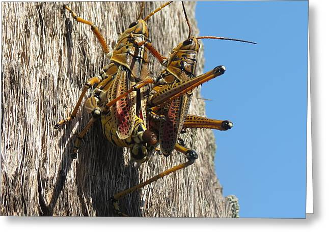 Grasshoppers Greeting Card by Fortunate Findings Shirley Dickerson