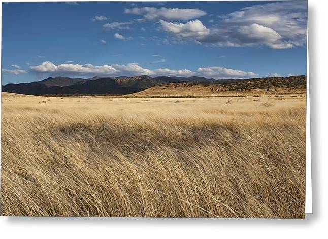 Grassland Expanse Greeting Card by Gregory Scott