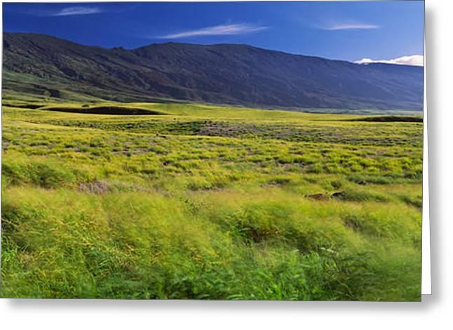 Grassland, Kula, Maui, Hawaii, Usa Greeting Card