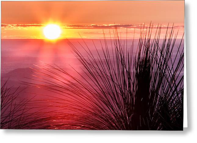 Greeting Card featuring the photograph Grasstree Sunset by Peta Thames