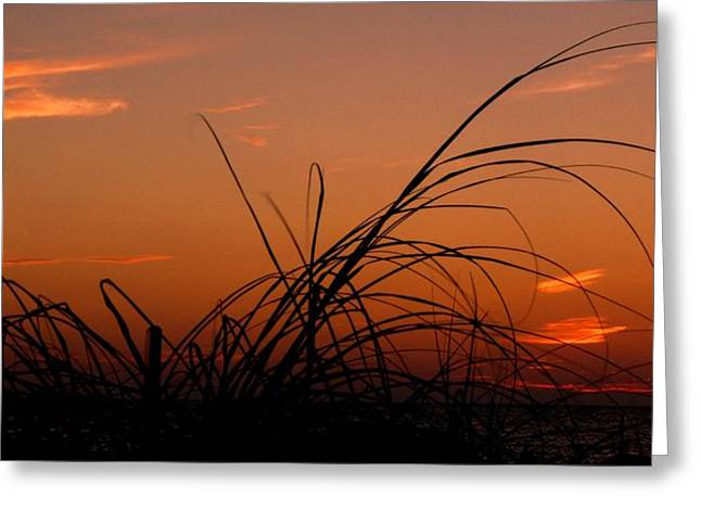 Greeting Card featuring the photograph Grassy After Glow by Richard Zentner