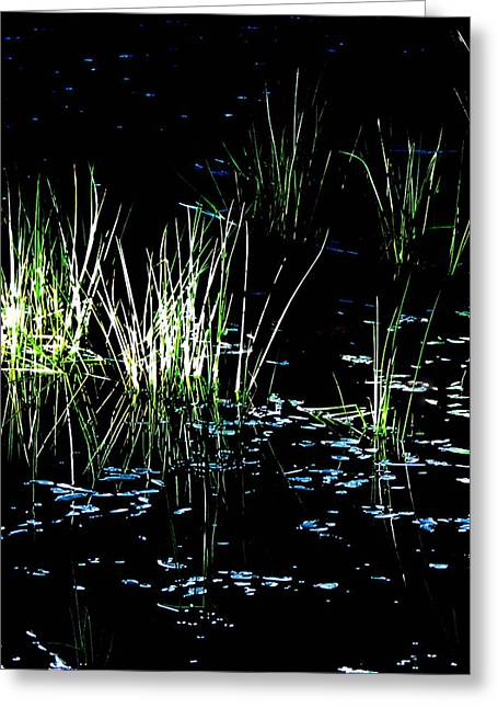 Grassy Lights Greeting Card
