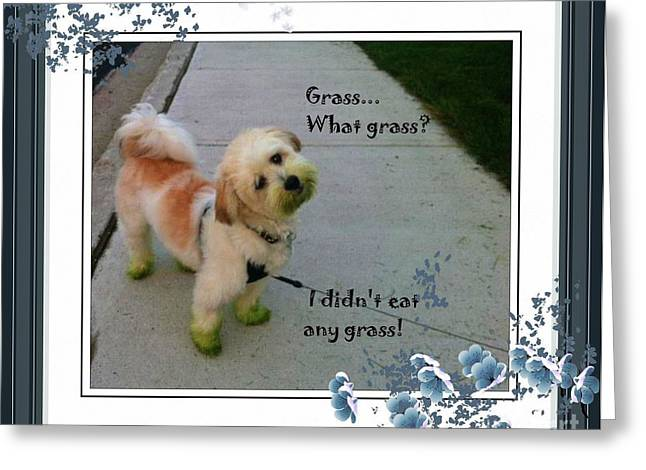 Grassy Puppy Greeting Card by Barbara Griffin