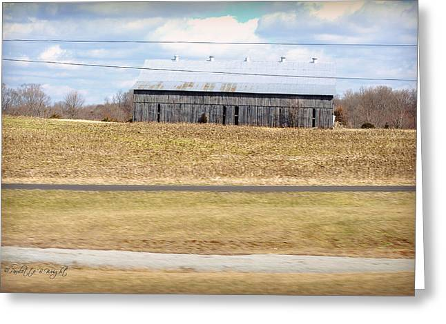 Gray Barn In A Cornfield Greeting Card by Paulette B Wright