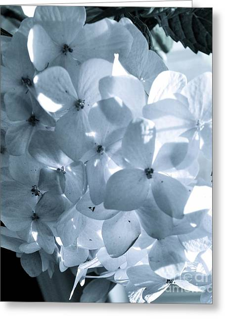 Gray Hydrangea Greeting Card