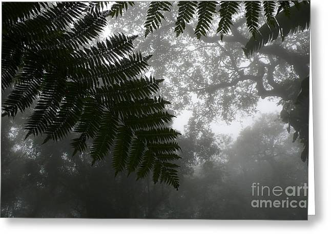 Gray Jungle Mist Greeting Card by Gregory Smith