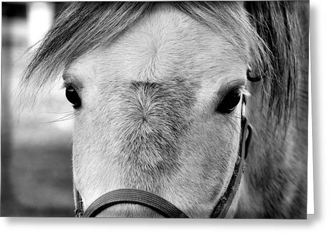 Gray On Gray Greeting Card by JAMART Photography