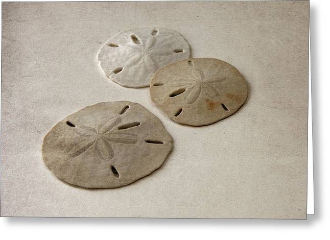 Gray Taupe And Beige Sand Dollars Greeting Card by Brooke T Ryan