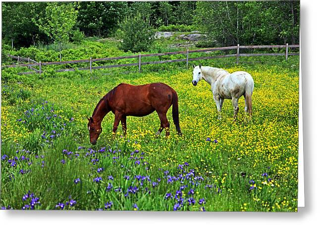 Grazing Amongst The Wildflowers Greeting Card